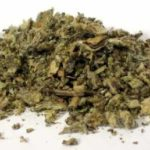 mullein 150x150 Mugwort hallucinogens great benefits depressant alike all herbs