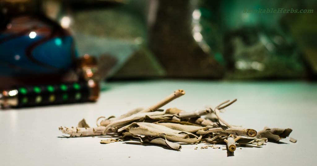 White Sage Effects & Benefits - Smokable Herbs