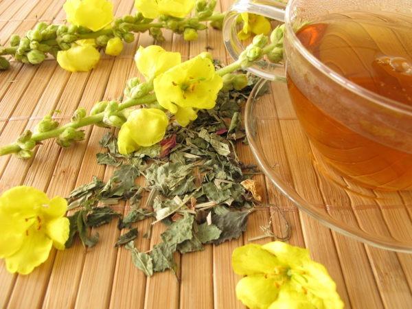 Molène | thé aux fleurs de molène