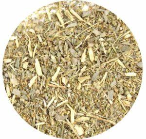 L'absinthe (Artemisia absinthium)