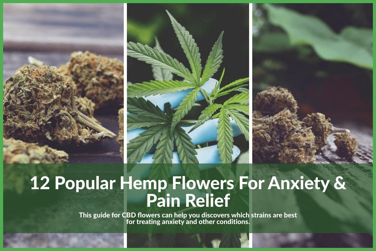 hemp-flowers-anxiety-post-masthead