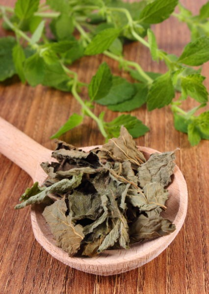 Dried and fresh lemon balm with spoon on wooden table, herbalism
