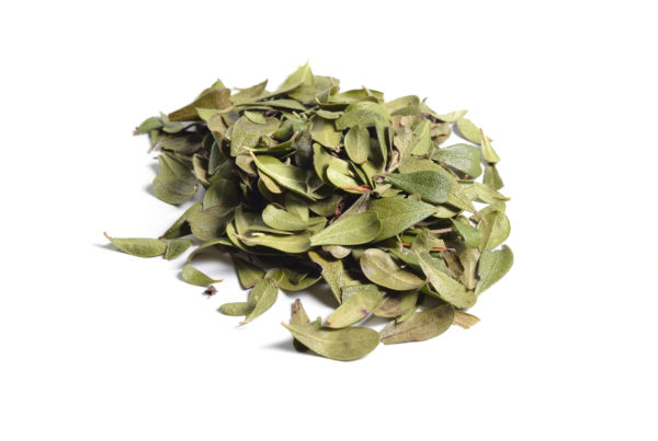Uva ursi dried medicinal herbs on white background